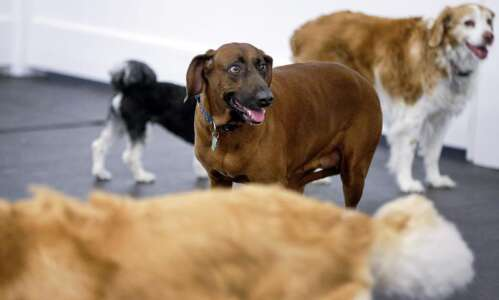 This Cedar Rapids doggy day care is a haven for…