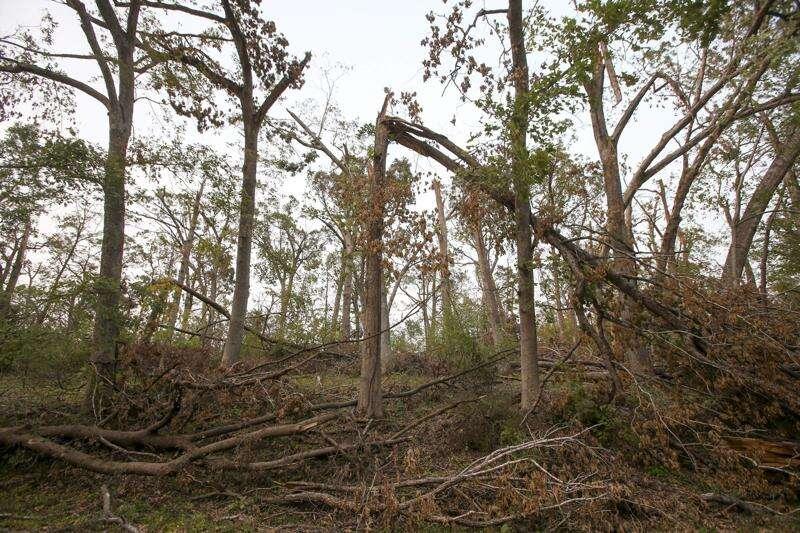 ReLeaf team shares vision for replanting Cedar Rapids parks after derecho
