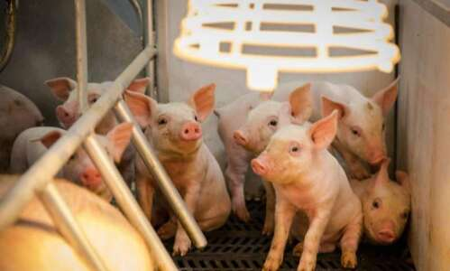 Charges dropped against activist who exposed Iowa hog deaths