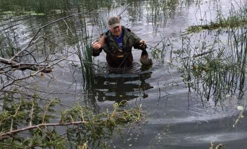 A call to duck hunting