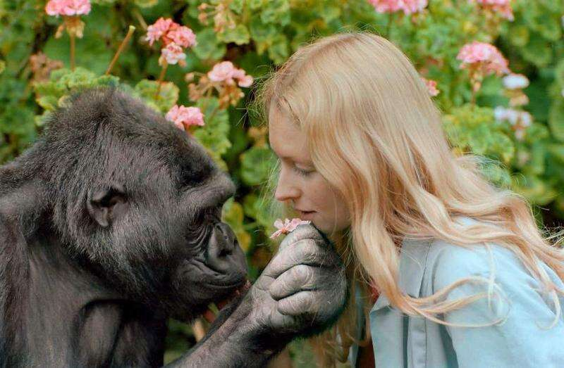 Koko and the value of empathy