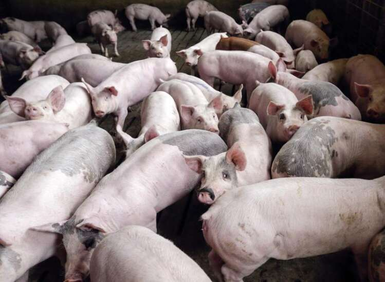Iowa statewide alliance calls for moratorium on large-scale livestock operations