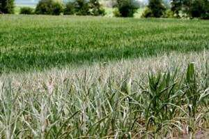 Iowa facing drought conditions
