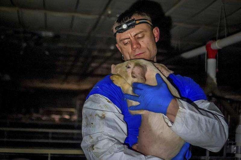 Animal welfare group charges neglect on Iowa senator's hog farm