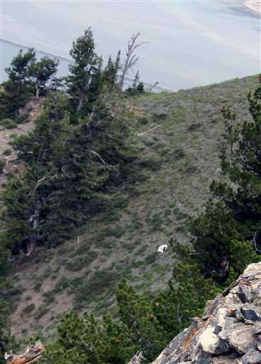 'Goat man' spotted in mountains of northern Utah