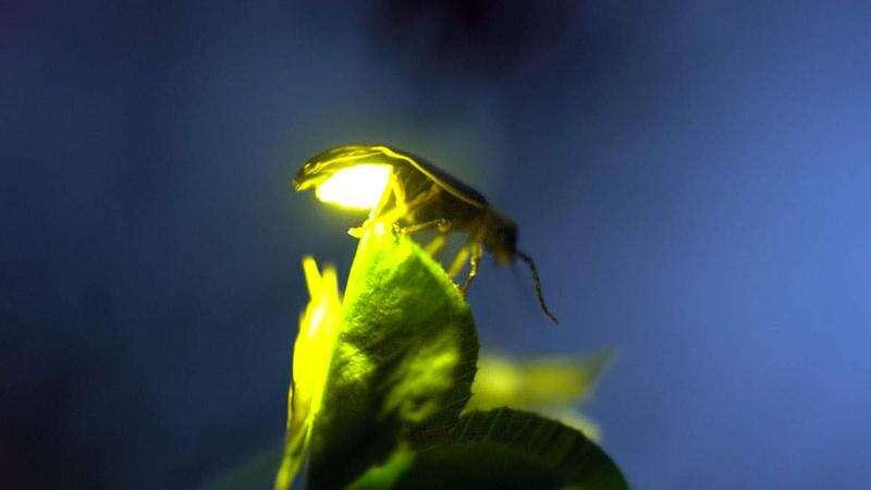 Capturing fireflies