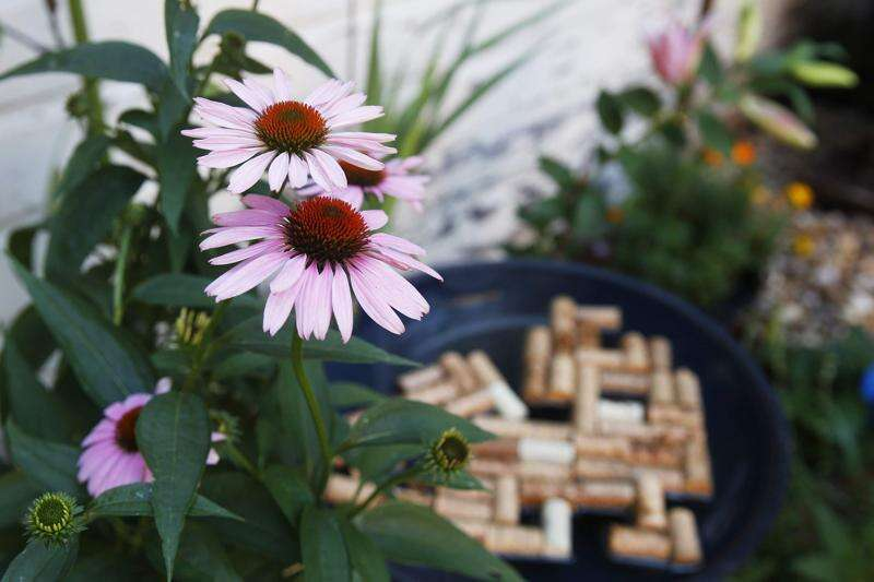 Cedar Rapids couple creates an urban bee oasis