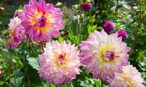 Plant summer bulbs now to feel happy