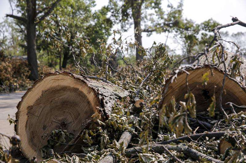 Cedar Rapids contracts with Wisconsin company for tree debris removal after derecho