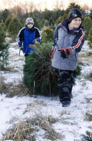 Time Machine: Iowa Christmas tree growers organized 65 years ago to guarantee holiday greenery