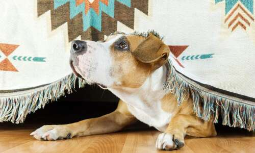 How can I prepare my pet for spring storms?