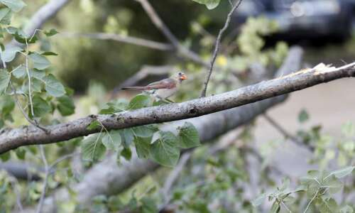 Harmful to humans, Iowa derecho could help wildlife