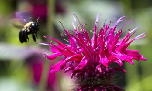 Learn how to help bees in urban areas on Sunday