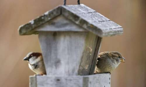 Make your backyard bird feeder and welcoming place