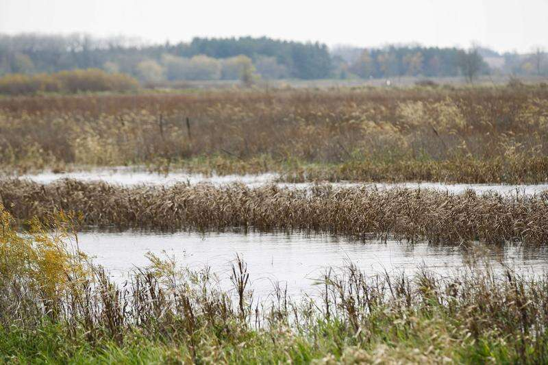 Wetland credited with reducing flood's crest