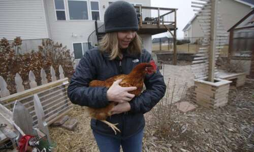 North Liberty to consider letting urban chickens stay for good