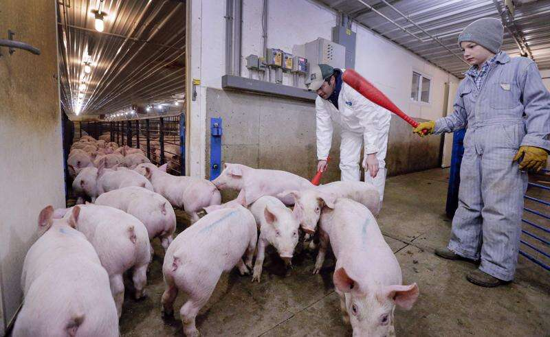 Large-scale pork production may push farther into Eastern Iowa