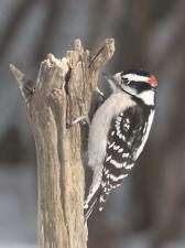 COMMUNITY: Bird count draws big numbers