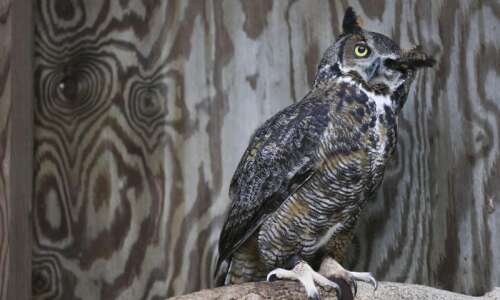 Iowa Raptor Project director aims to have programs flying high…