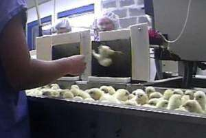 Iowa Senate approves measure to protect agriculture from 'gotcha' videotaping