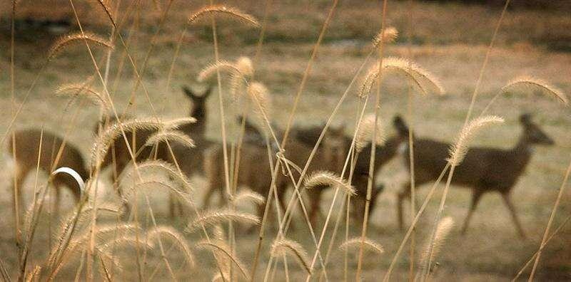 Cedar Rapids releases statistics from urban deer hunt
