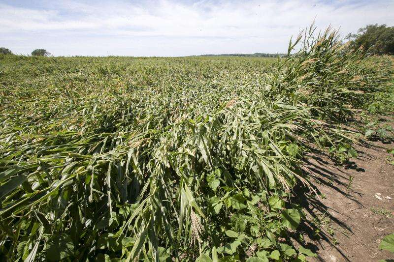 Derecho windstorm removes 550,000 Iowa corn acres from harvest