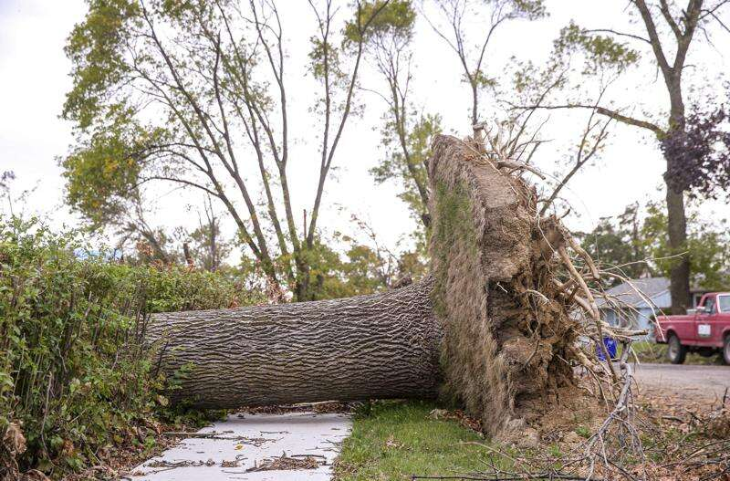 Iowa Ideas panelists see new growth from derecho tree destruction