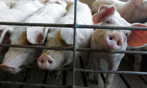 New rules to protect animal farmers expected soon