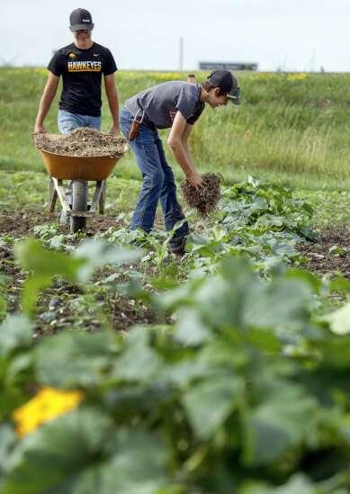 Cedar Rapids Prairie FFA pumpkins grown by students go on sale Monday