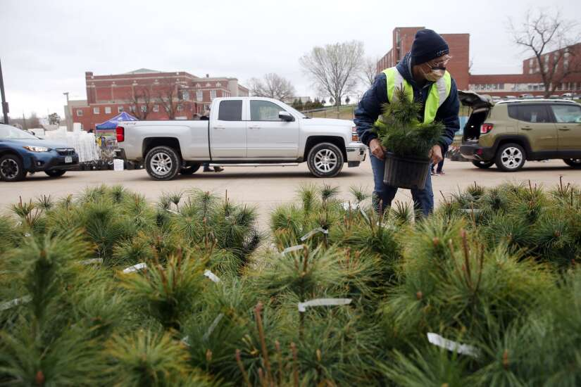 Partnerships aim to replant thousands of trees on derecho-damaged private land in Linn County