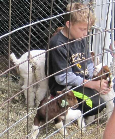 Maasdam Barns to host 'Babies at the Barns' May 8