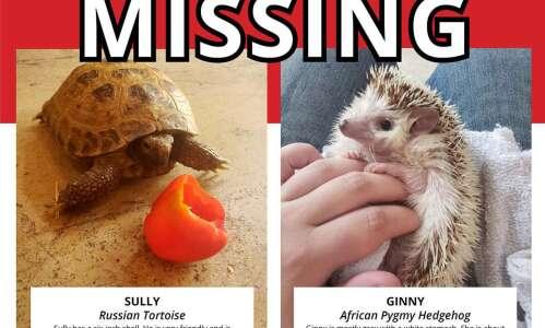 Tortoise, hedgehog stolen from Old MacDonald's Farm at Bever Park