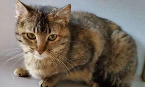 Pet of the Week: Meet Delilah