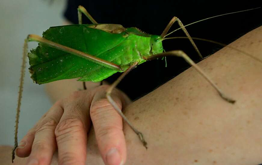 The singing insects of summer