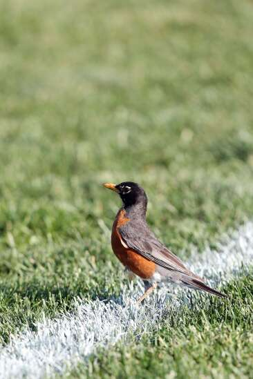 Iowa Photo: Nature on the soccer field