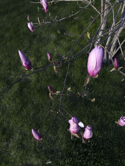 Iowa Photo: Promise of spring