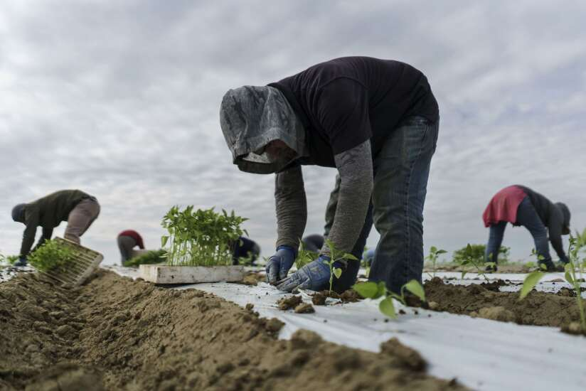 Farmworker overtime would end pay gap: lawmakers