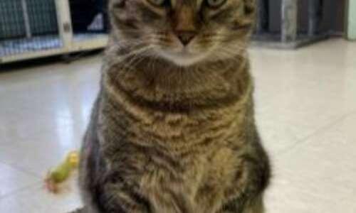 Pet of the Week: Meet Sassy