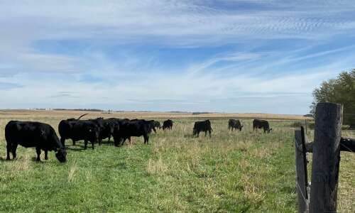Beef operation wins Iowa stewardship award