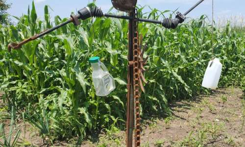 My sculpture 'Derecho' serves as garden scarecrow